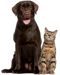 dog_cat_group_01.png
